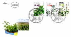 2006 Medicinal Herbs and Spices   First Day Cover