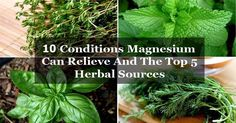 10 Conditions Magnesium Can Relieve And The Top 5 Herbal Sources