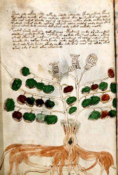Using AI to uncover the mystery of the Voynich manuscript Voynich Manuscript, Medieval Manuscript, Illuminated Manuscript, Codex Seraphinianus, Handwritten Text, Alchemy Art, New Scientist, Ancient Mysteries, Roman Empire