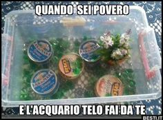 L'acquario Funny Pins, Funny Memes, Lol, Just Smile, Funny Cute, Comedy, Funny Pictures, Geek Stuff, Lifestyle