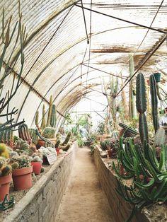 Plam Springs, CA | Moorten Botanical Garden #travel #explore #california www.vainpursuits.com