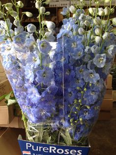 Delphinium 'Ivors Arrow'...Sold in bunches of 10 stems from the Flowermonger the wholesale floral home delivery service.