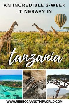 Looking for a unique Tanzania itinerary that mixes adventure, safaris, culture and beaches? Then this 2 weeks in Tanzania itinerary is right for you! Africa Destinations, Travel Destinations, Places To Travel, Places To Visit, Travel Stuff, Zanzibar Beaches, Alaska Travel, Alaska Cruise, Viewing Wildlife