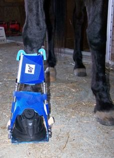 Digital Dynasplint System- Equine dynamic splints for rehabilitating the joints and muscles of horses - By Dynasplint®