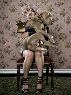 Pitbulls, not just a lap dog!! I need to take a picture like this!!