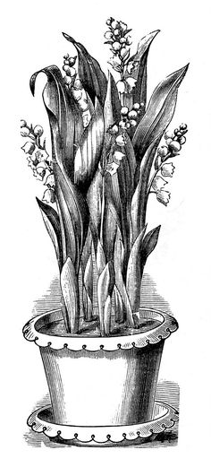 *The Graphics Fairy LLC*: Vintage Botanical Clip Art - Potted Lily of the Valley