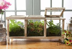 Tabletop Terrarium/Planter by Evergreen