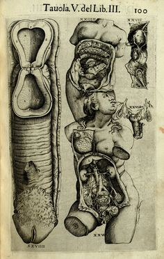 Engraving attributed to Nicolas Beatrizet from a drawing by Gaspar Becerra and copied from a figure by Vesalius. Anatomic illustration, p. Diagram of the female urogenital system in 6 figures. Title supplied by cataloger. Human Anatomy Art, Anatomy Drawing, Medical Illustration, Illustration Art, Female Reproductive Anatomy, Medical Drawings, Plane Photography, Medical Anatomy, Museum Of Curiosity