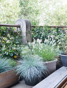 Ook in de herfst en winter hebben we graag groen op ons balkon / www.woonblog.be