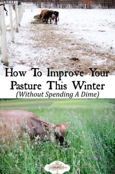 How to Improve & Reseed Your Pasture This Winter (For Free) (Chicken Backyard Ideas) The Farm, Small Farm, Backyard Farming, Chickens Backyard, Backyard Landscaping, Backyard Ideas, Valentine's Day Quotes, Permaculture, My Horse