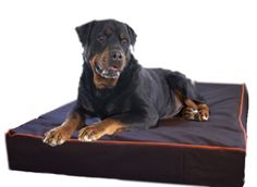 Black Extra Large Dog Bed with orange accents for Rottweilers