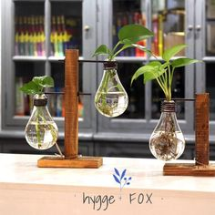 These vintage style light bulb bud vases display your plants in a creative and unique way. Style: Rustic Function: Tabletop Vase, for indoor use Material: Bamboo & Glass Light Bulb Vase, Light Bulb Crafts, Light Bulb Terrarium, Vases Decor, Plant Decor, Wall Vases, Diy Home Crafts, Diy Home Decor, Décor Antique