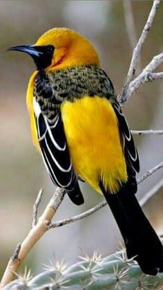 ? Anyone ...... Nice looking bird