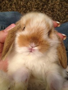 """the """"i love you"""" face that all rabbits make"""