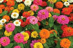 Top 10 Foolproof Plants for Kids. birdsandblooms.com