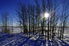 Calgary's Nosehill Park in winter