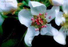 #alentejo #flores #pereira