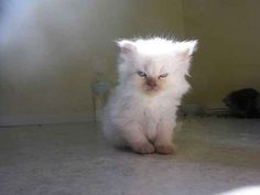 Disaffected Kitten | The 100 Most Important Cat Pictures Of All Time