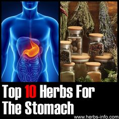Top 10 Herbs For Stomach