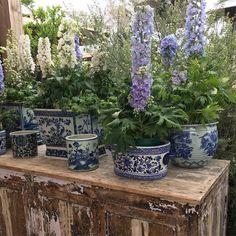 Garden inspiration #chinoiserie #blueandwhite #delpheniums #flowers #gardenroomstyle #plantagarden @rogersgardens