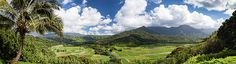 A stunning view of the taro fields and lush green mountains of the Hanalei Valley. A dramatic, late afternoon sky frames the panoramic photo. This photo captures how the beauty of nature and agriculture can coexist.  #kauai #hawaii #hanalei #wanderlust #landscapes #photography #travel #nature #outdoors #beauty #tropical #getaway