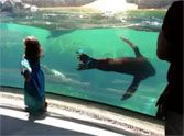 Sea Lion Gets Concerned For a Little Girl - TOO SWEET