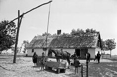 Πότισμα αλόγου σε μικρό αγρόκτημα