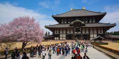 things to do in nara japan