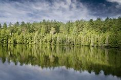 #bank #calm #clouds #fir #fir trees #forest #green #lake #nature #quiet #reflection #reflections #shore #sky #trees #water