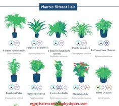 1000 id es sur le th me plante d 39 int rieur sur pinterest - Plantes interieur depolluante ...