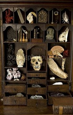 A cabinet of Curiosities - C008/8250 - enlarged - Science Photo Library