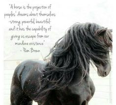 A horse is the projections of people's dreams about themselves /-Strong, powerful , beautiful, and it has the capability of giving  us escape from  mundane existence