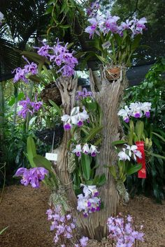 Trouxemos uma lista muito legal comBest 25 types of exotic tropical flowers for your home and Fresh Front Yard and Backyard Landscaping Ideas for 2019 Exotic Flowers, Tropical Flowers, Beautiful Flowers, Orchid Planters, Orchids Garden, Garden Plants, Garden Art, Garden Design, Orchid House