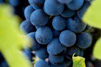 Vinos mexicanos y vinicolas de Mexico: Descubra el Mexico de los vinos con muchosvideos...