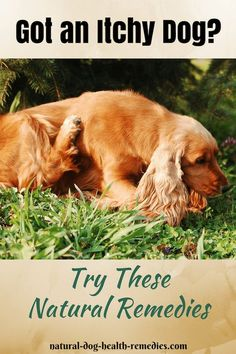Information on natural itch relief for dogs - Use natural remedies, such as herbs, supplements, and minerals to relieve dog itching.