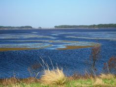5 Things to Know About Wetlands