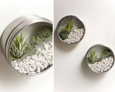 How-To Make Eco-Friendly Terrariums- How -To Make A Magnetic Terrarium