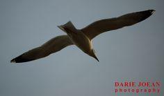 #Birds Birds, Photography, Animals, Photograph, Animales, Animaux, Fotografie, Bird, Photoshoot