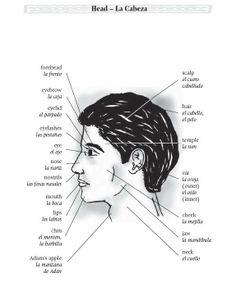 Medical Spanish Terminology  | ... Spanish Nursing Medical Health Terminology Medical Dictionary CD
