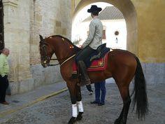 Caballo con Jinete en puerta de Caballerizas Reales, Cordoba,España.