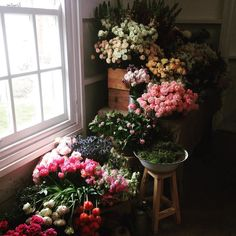"Trentham florals RepostBy @flowerheaventrentham: ""Very special day one of #flowerdispensarymasterclass"" (via #InstaRepost @AppsKottage) Thank you to the following vendors & individuals #flowerdispensarymasterclass  Assisted by: @brookefaithe & Kristen Miller  Photographer:@katiegrantphoto Venue: @theestatetrentham  HAMU artist: @cassandra.de.bruin Model: gracemunday @tedfinlay Dress: @thebridalatelier Catering: @thetrenthamcollective Wines & beverages : @unionstreetwines @natasha_morgan…"