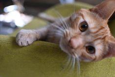 CAT Cats, Animals, Gatos, Animales, Animaux, Animal, Cat, Animais, Kitty