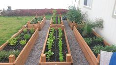 Garden is growing