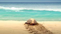 Kapverden Reisen - Boavista - Turtle Foundation - Meeresschildkröten