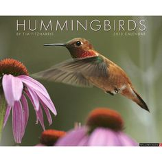 Hummingbirds Wall Calendar: Problem: Flitting about like tiny fairies, hummingbirds invariably prevent us from getting a really good look at them. Solution: The 12 dazzling, close-up images in this wall calendar capture North American hummers in all their astounding beauty!  http://www.calendars.com/Backyard-Bird/Hummingbirds-2013-Wall-Calendar/prod201300002845/?categoryId=cat00176=cat00176#
