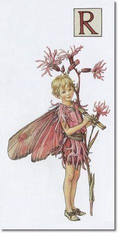 Cicely Mary Barker - A Flower Fairy Alphabet - The Ragged Robin Fairy Archival Fine Art Paper Print