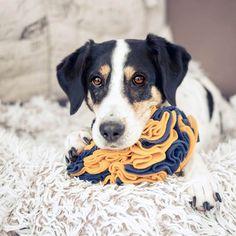 Schnüffelspielzeug für Hund selbermachen Olaf, Labrador, Dogs, Diy Dog, Easy, Instagram, Dog Accessories, Pooch Workout, Pets