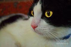 Kitty Photograph by Naomi Burgess #cat #animals #photography