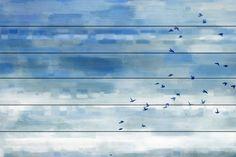 Blue Sky Birds - Parvez Taj