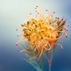 40 Amazing and Beautiful Pictures of Flowers